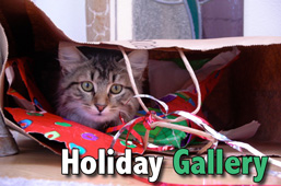 Holiday gallery